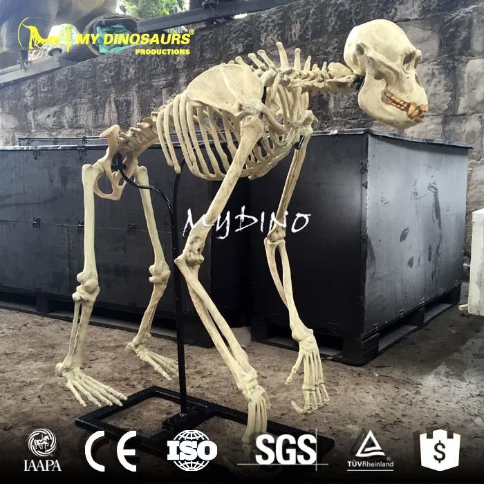 artificial gorilla skeleton