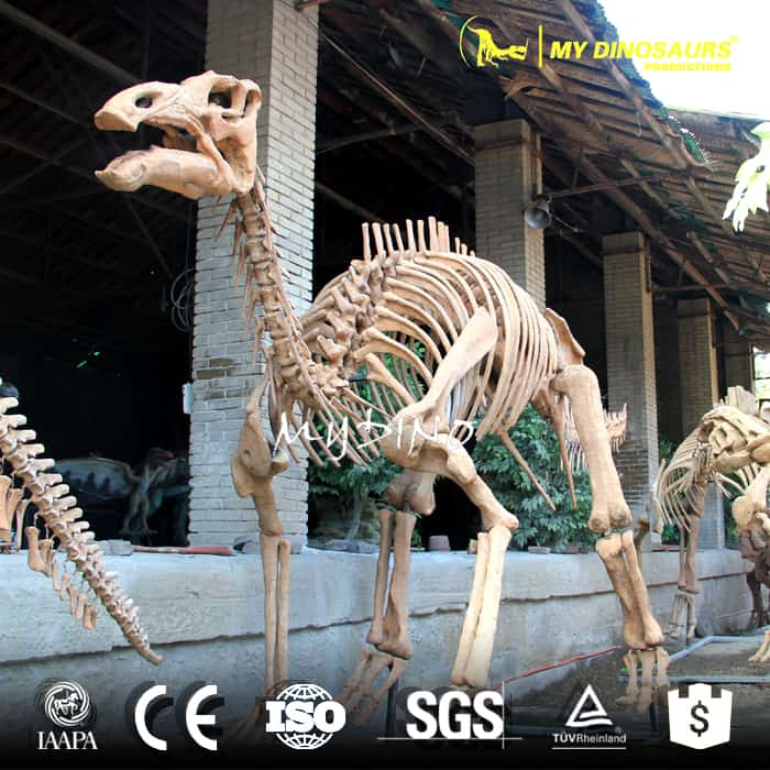 artificial maiasaura skeleton