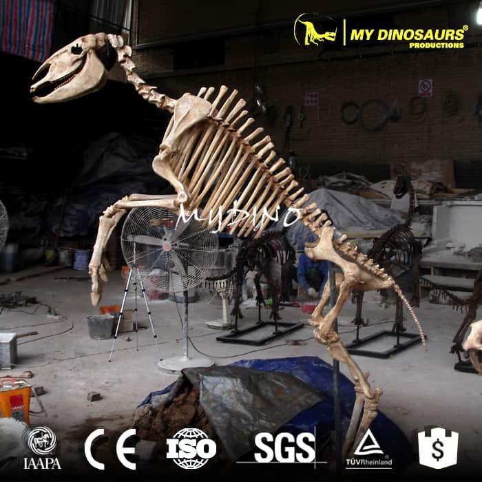 horse skeleton model