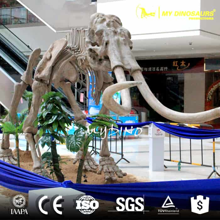 life size mammoth skeleton