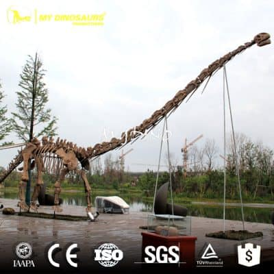 Shopping Mall Dinosaur Exhibition Mamenchisaurus Fossil Skeleton
