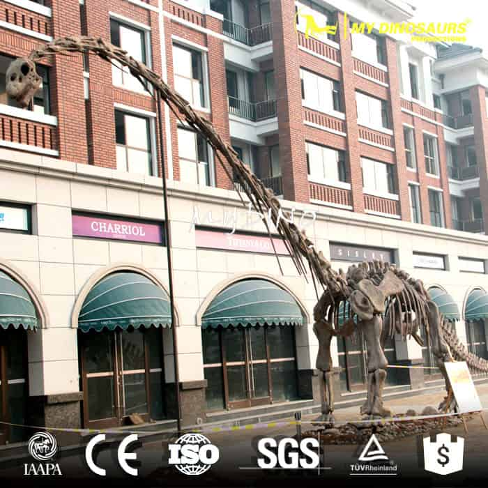 Omeisaurus Fossil