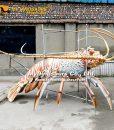 realistic lobster model