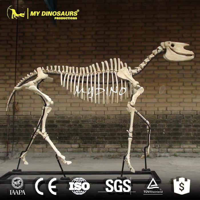 Hipparion Skeleton