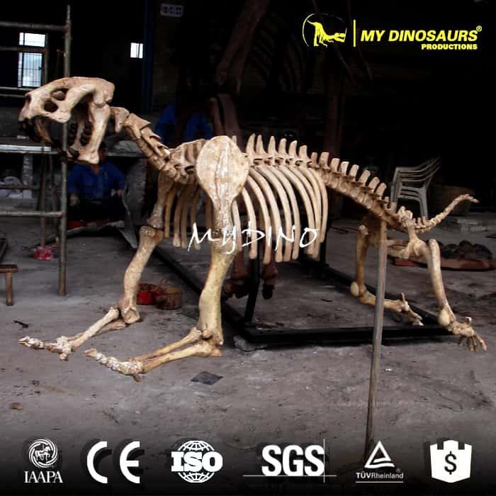 smilodon skeleton