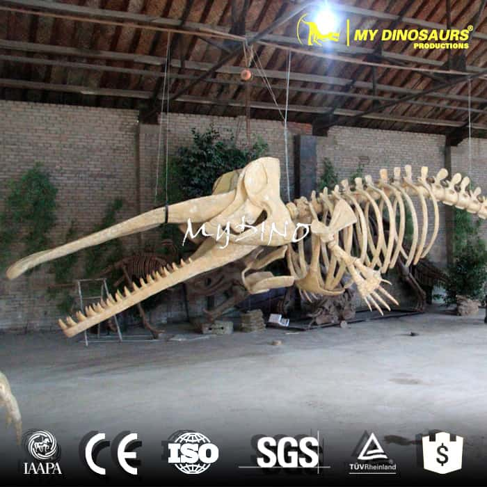 whale skeleton model for sale