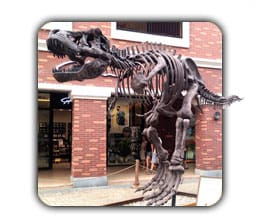 Dinosaur Skeletons/Fossils