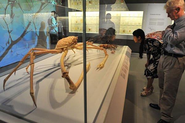 LKC Natural History Museum