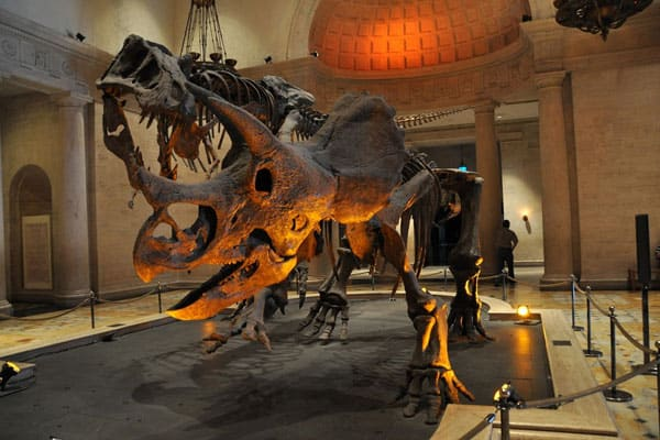 Natural History Museum of Los Angeles County6