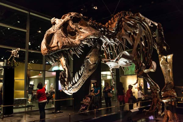 Royal Tyrrell Museum 7
