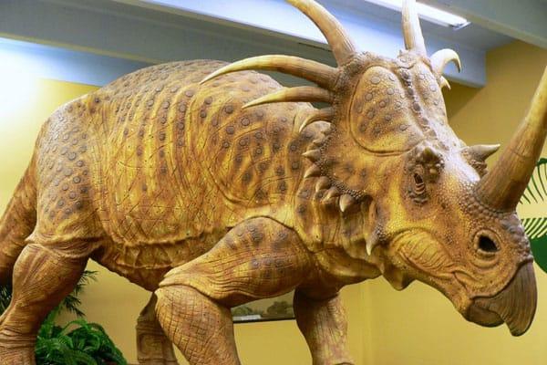 The Dinosaur Museum 3