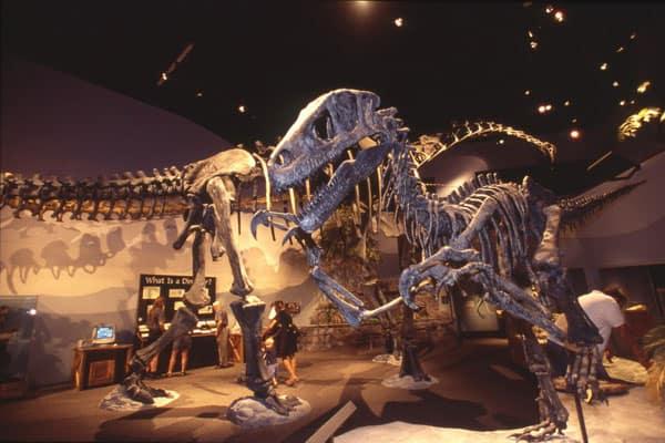 The Dinosaur Museum 4
