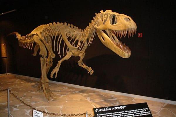 The Dinosaur Museum 5
