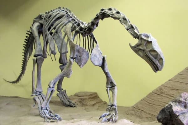 The Dinosaur Museum 7