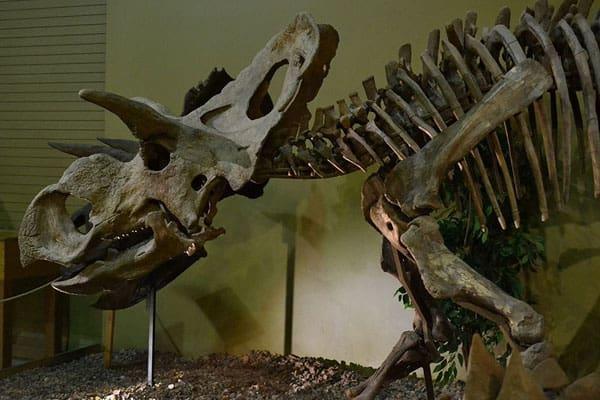 Wyoming Dinosaur Center 3