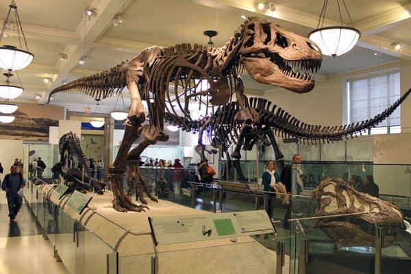 Yale Peabody Museum 2