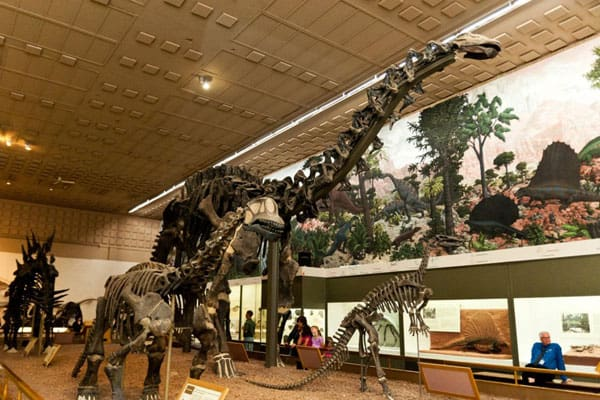 Yale Peabody Museum 5