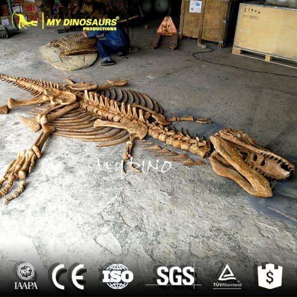 Dinosaur bones 1