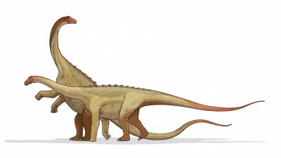 Saltasaurus dinosaur