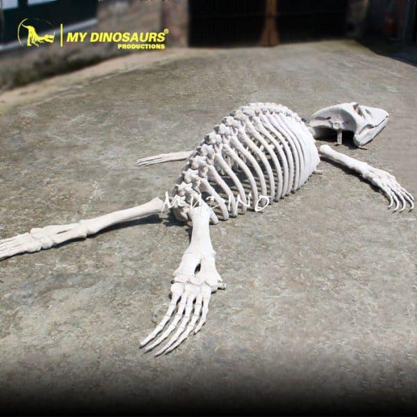 animal skeleton 1