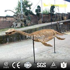animal skeleton model for sale