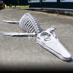 fiberglass animal skeleton 1