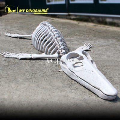 fiberglass animal skeleton 1