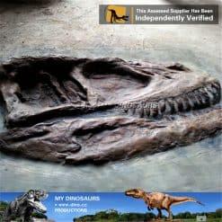 allosaurus head fossil wall 1