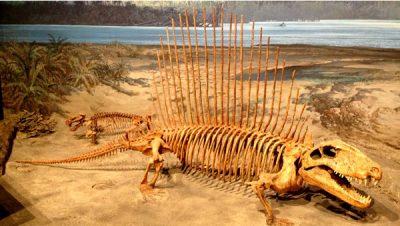 museum replica dinosaurs skeleton