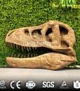 animals skulls and skeletons for sale