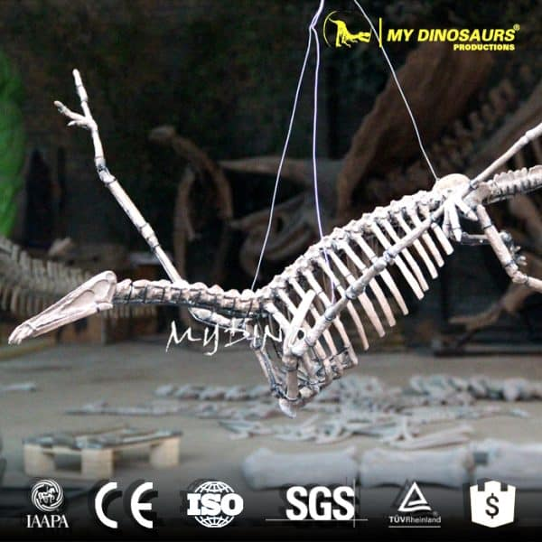 hanging pterosaur skeleton for sale