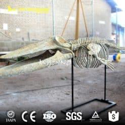 3M Whale Skeleton