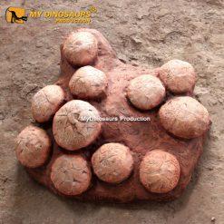Dinosaur egg fossils 1
