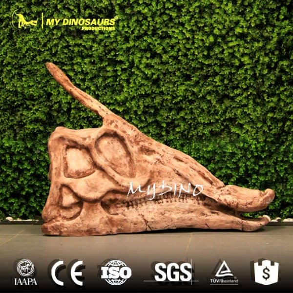 Hadrosaur Skull