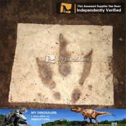 Life Size Dinosaur Footprint