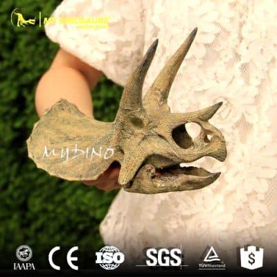Mini triceratops skull