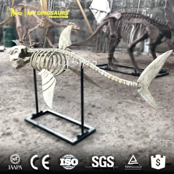 Shark skeleton.2