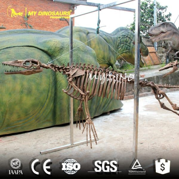 Ambulocetus Skeleton 1