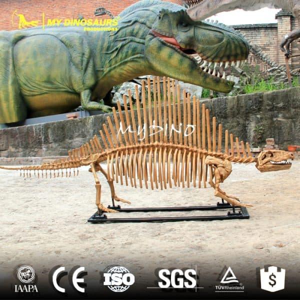 Dimetrodon Skeleton 1
