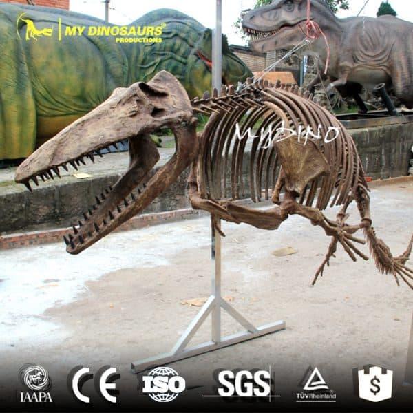 Mosasaur Skeleton 1