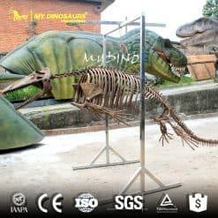 Mosasaur Skeleton