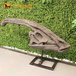 Parasaurolophus Skull 2