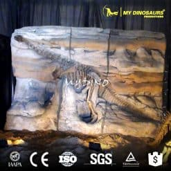 dinosaur fossil wall 1