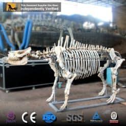 Chilotherium Skeleton 1