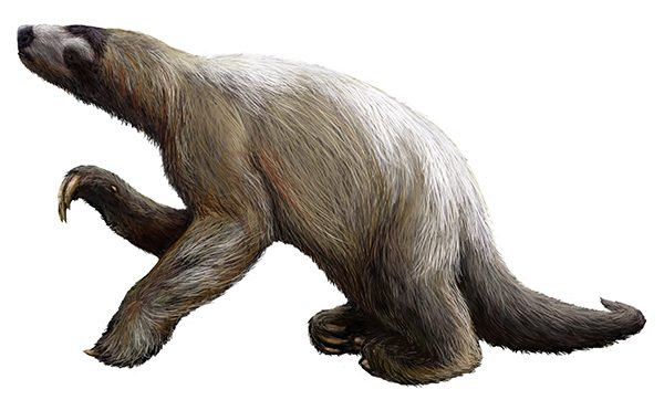 Ground sloth