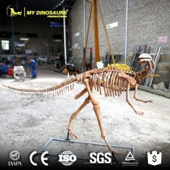 Yandusaurus Skeleton Model