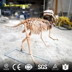 Yandusaurus Skeleton Replica