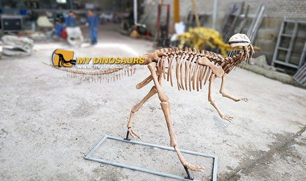Yandusaurus skeleton 1