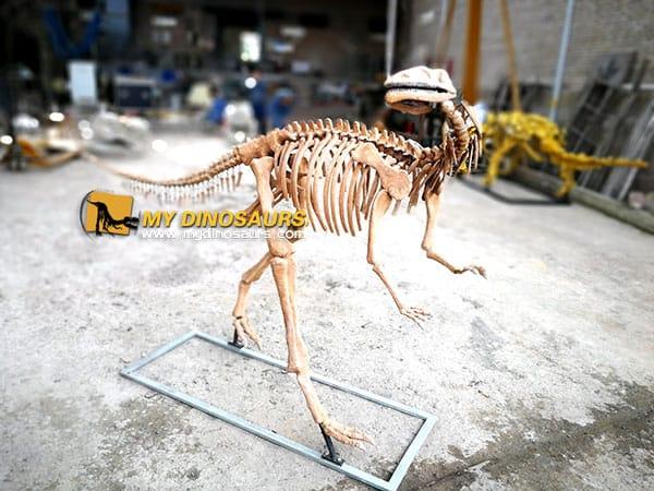 Yandusaurus skeleton