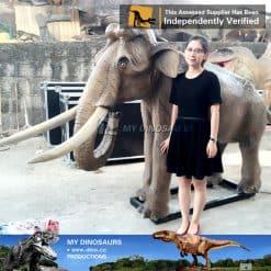 baby elephant1